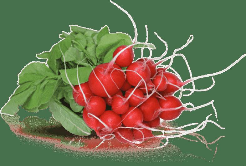 Radis Grossiste en fruits et légumes 100% bio